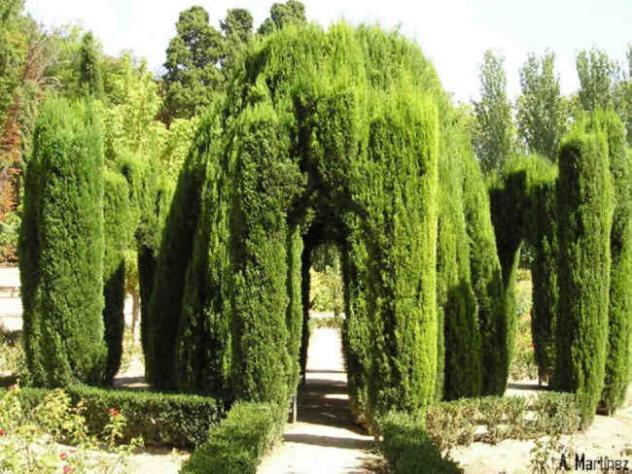 Jardin del principe tobog n aranjuez madrid for El jardin del principe