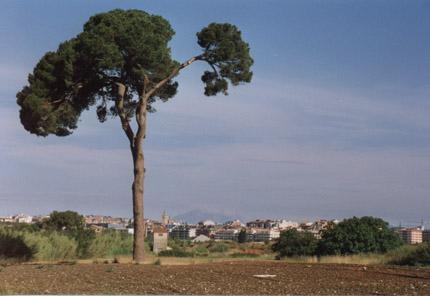 Pino emblematico sant cugat del valles barcelona - Temperatura actual en sant cugat del valles ...