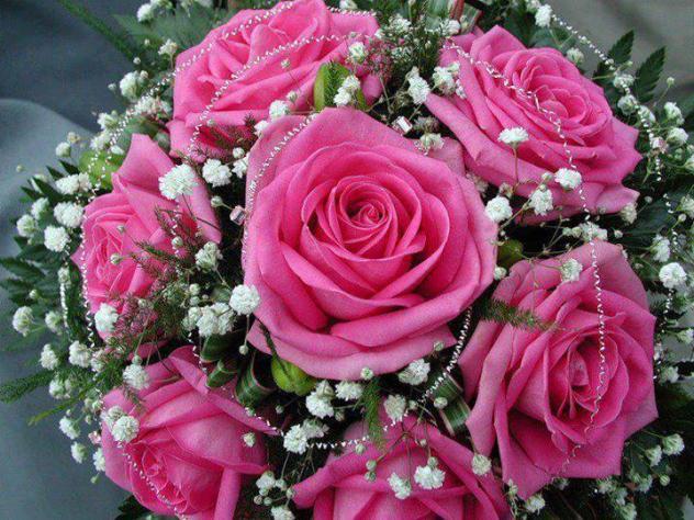 Seis Bonitas Rosas Palanquinos León