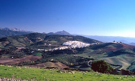 Vista panoramica prado del rey c diz - Tiempo en prado del rey cadiz ...