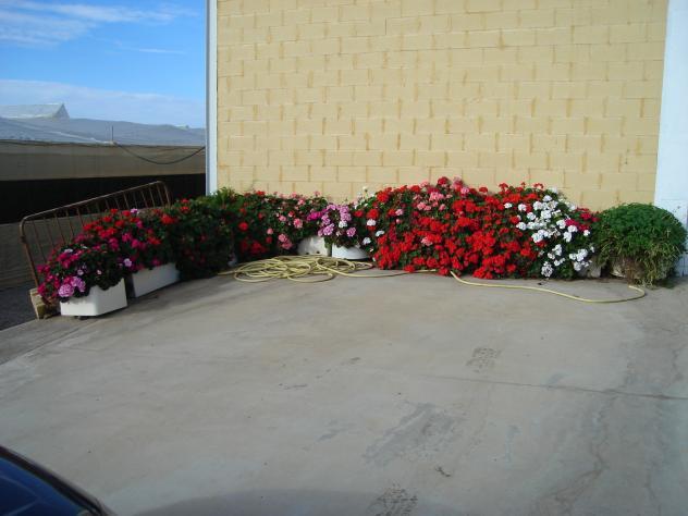 Mis jardineras con geranios plantas freila granada - Jardineras con plantas ...