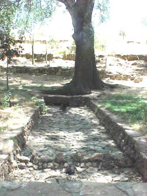 Fuente de penilla pena viveros albacete for Viveros albacete