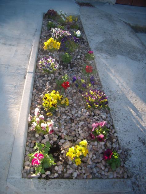pequeño jardín de flores entre piedras, FRANDOVINEZ (Burgos)