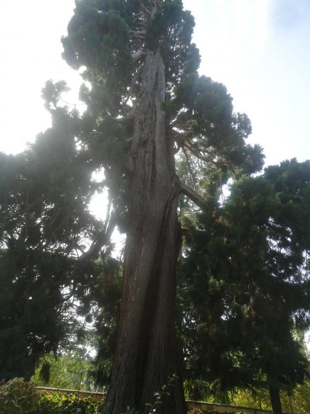 Gigante en el jard n casita del pr ncipe el escorial for El jardin del gigante