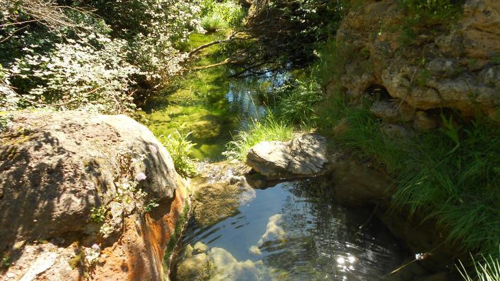 Peque o estanque la mussara tarragona for Estanque pequeno