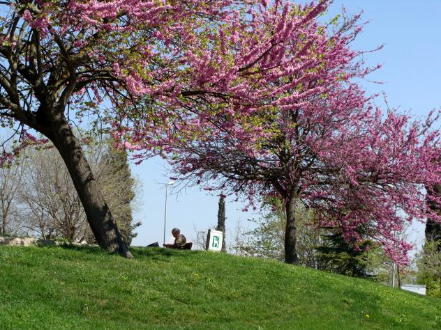 Primavera sant cugat del valles barcelona - Temperatura actual en sant cugat del valles ...