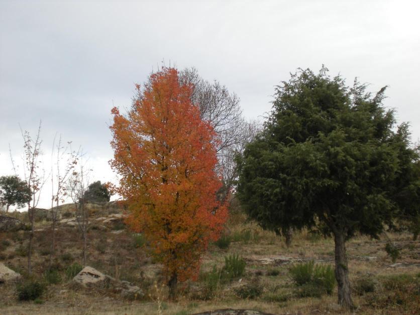 Hoja caduca la cabrera madrid for Diferencia entre arboles de hoja caduca y hoja perenne