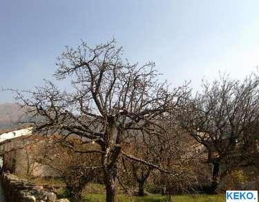 Rboles de hoja caduca san esteban del valle avila for Arboles de hoja caduca