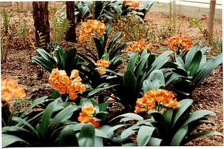 Jardin tropical estaci n de atocha plantas 001 madrid - Jardin tropical atocha ...