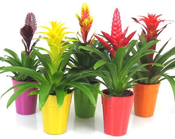 Macetas con flores de colores la nuez de arriba burgos - Plantas con flor de interior ...