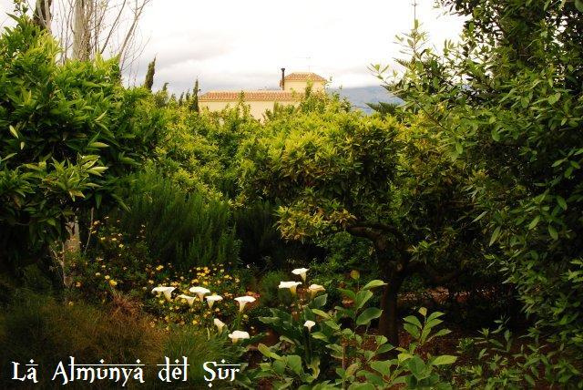 Jard n bot nico la almunya del sur el ejido almer a for Jardin botanico almeria