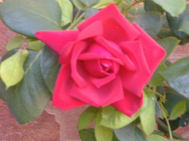 Una Rosa Para Otra Rosa Torre De Santa Maria Cáceres