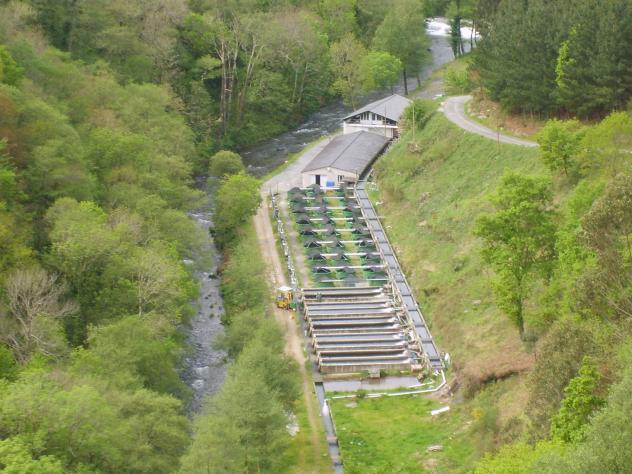 Criadero de truchas y salmones junto al rio eo ribeira de for Criaderos de truchas y tilapias