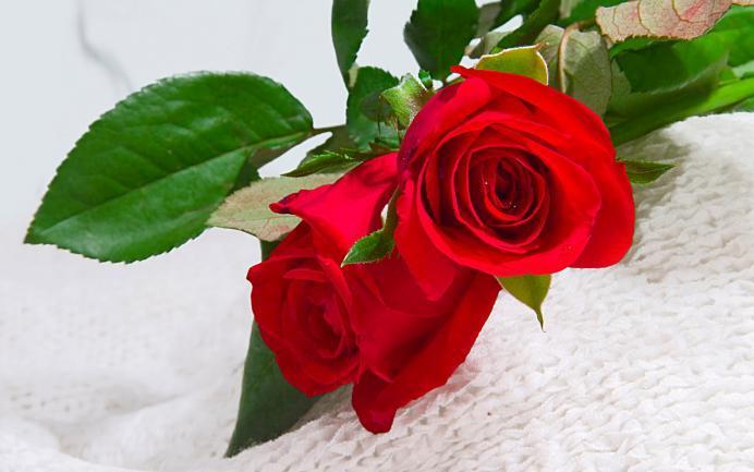 Esa Bella Rosa Para Ti Petres Valencia
