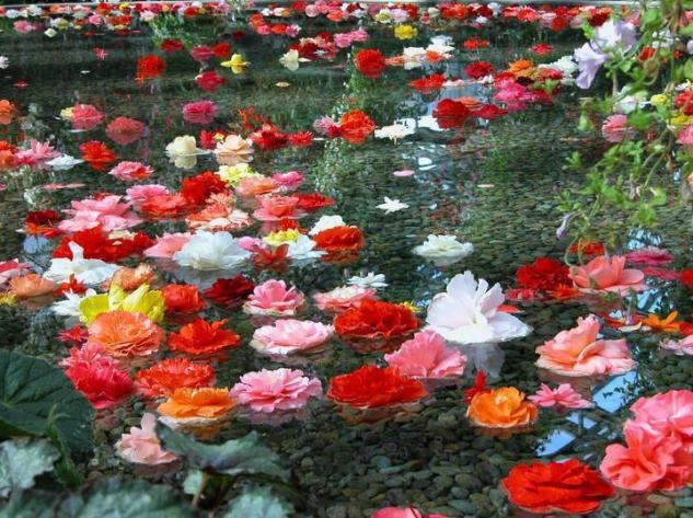 preciosas flores en el campo HINOJAL Cceres