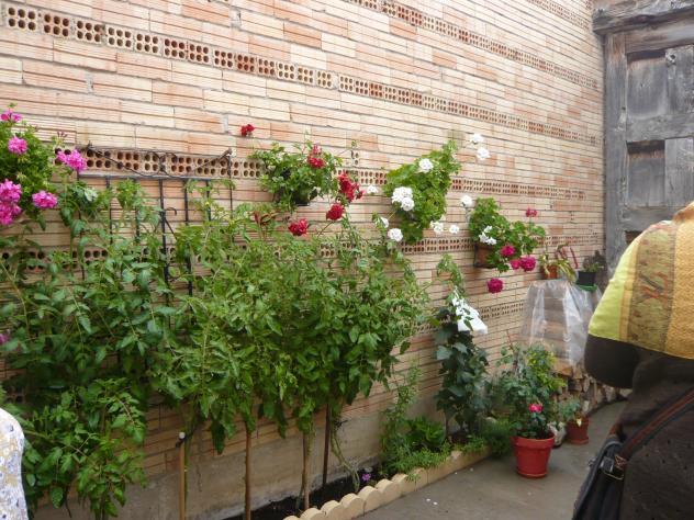 Macetas en la pared y plantas redecilla del camino burgos - Macetas en la pared ...