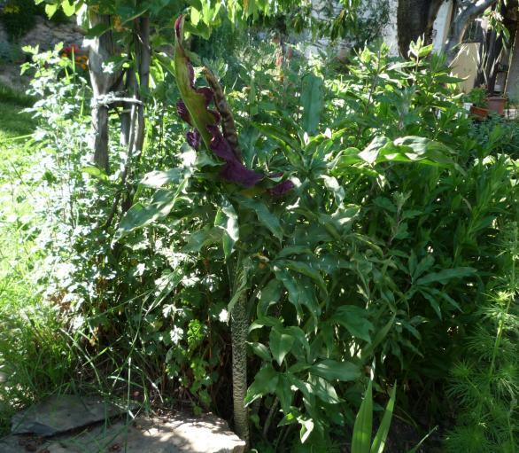 Resultado de imagen para planta de culebra