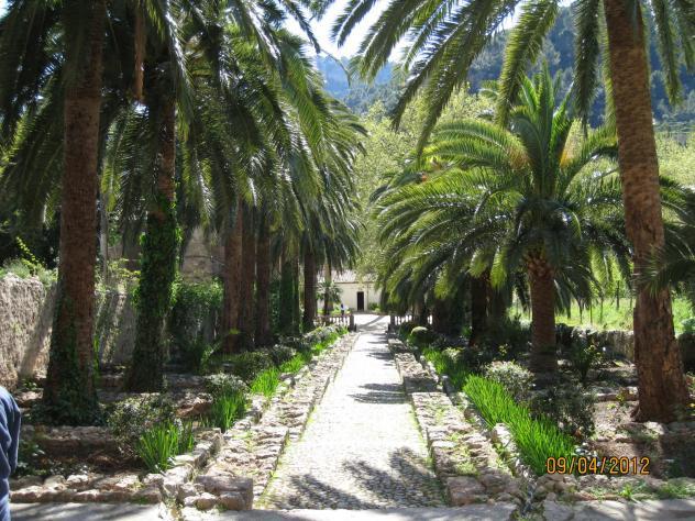 Palmeral en los jardines de alfabia bunyola islas baleares for Jardines alfabia
