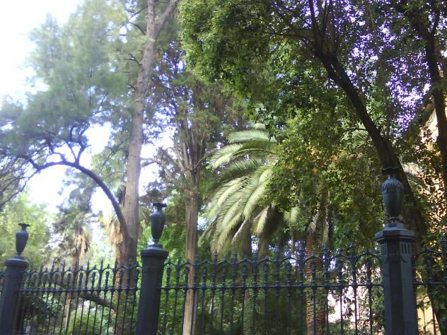 Jard n bot nico granada for Jardin botanico de granada
