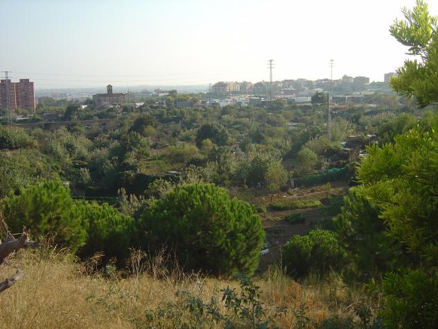 Cultivos en la ciudad esplugues de llobregat barcelona - Aticos en esplugues de llobregat ...
