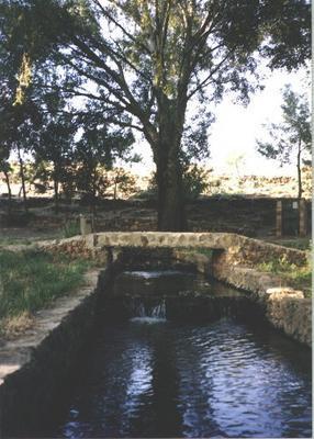 Nacimiento del rio pinilla viveros albacete for Viveros albacete