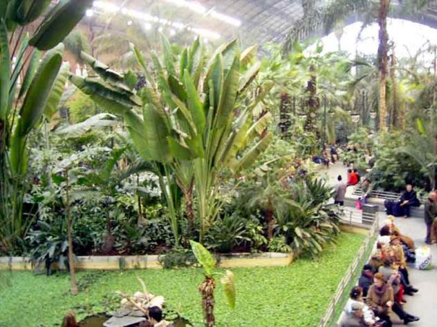 Atocha jard n tropical madrid - Jardin tropical atocha ...