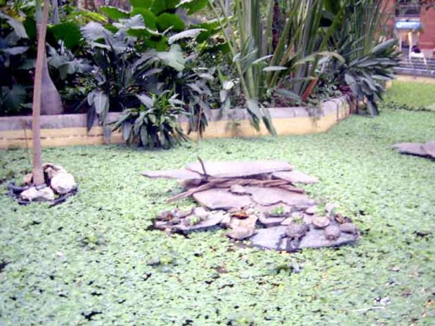 Atocha jard n tropical 7 madrid for Jardin atocha