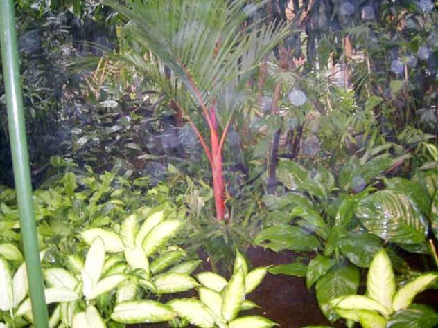 Atocha jard n tropical 15 madrid for Jardines 15 madrid