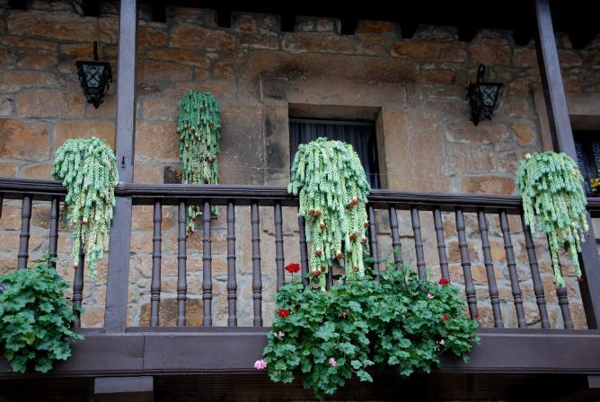 Resultado de imagen para plantas colgantes