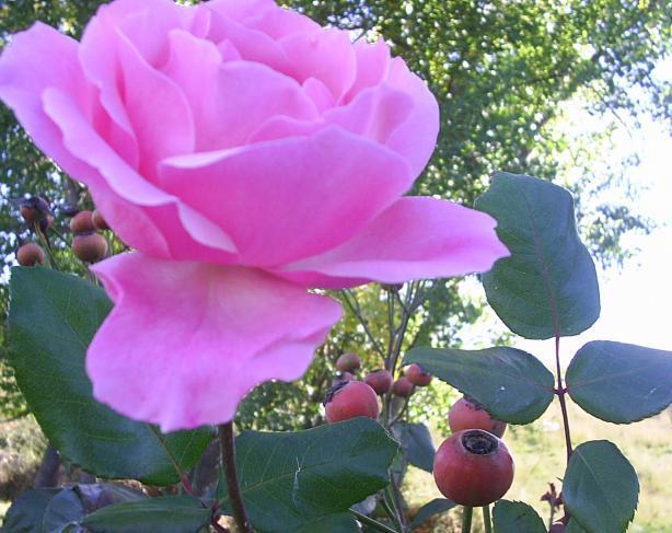Que Bonitas Rosas Lemoa Vizcaya
