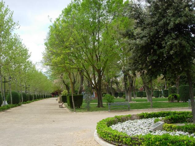 Especies de rboles y arbustos ciudad real for Especies de arbustos